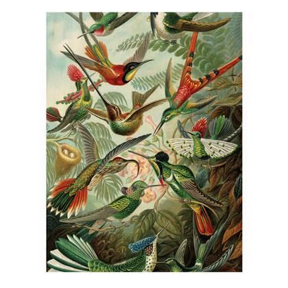 KEK Amsterdam Exotic Birds Print op hout S